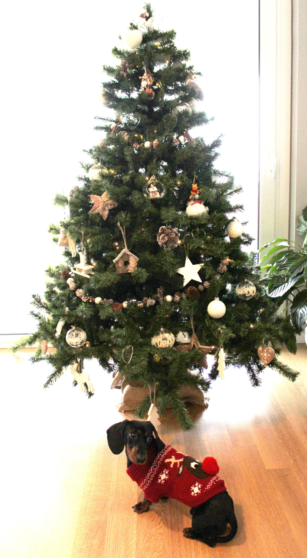 Aspettando i regali sotto l'albero...